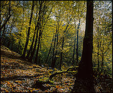 Shirabad Forest