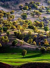 Oak Groves in Iran